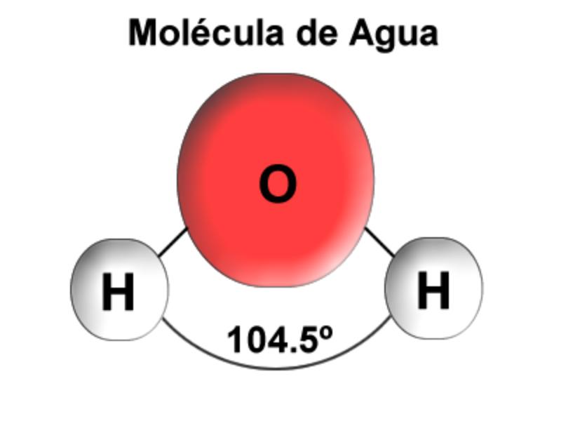 Las moléculas de la vida. Agua y sales.
