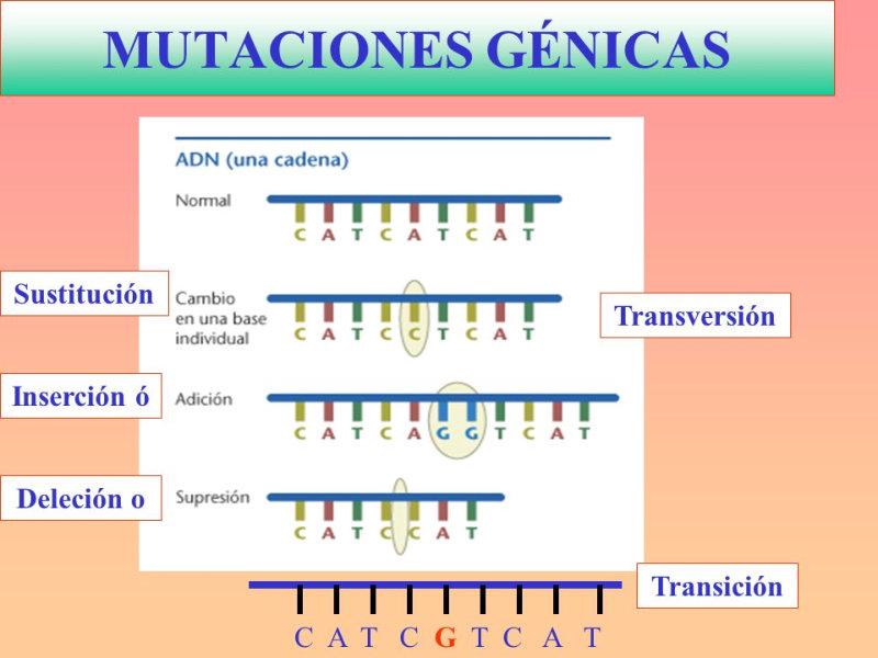 mutacioncancer