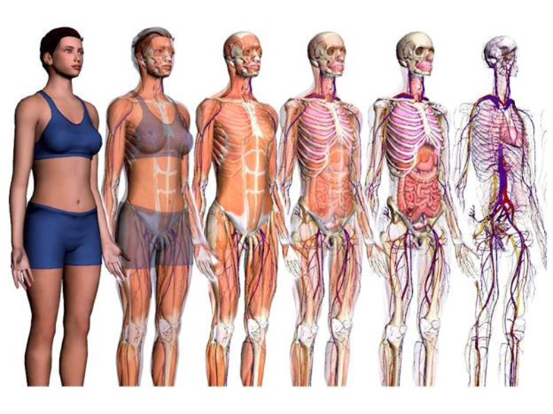 Órganos, aparatos y sistemas